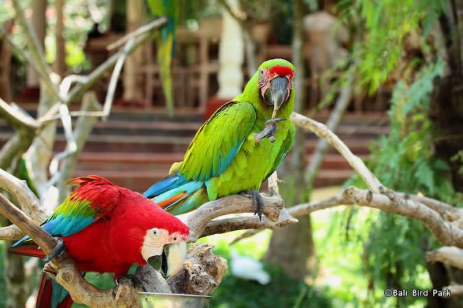Destinasi-Taman-Burung